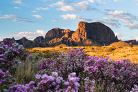 Sagebrush in bloom at the Chisos Mountains